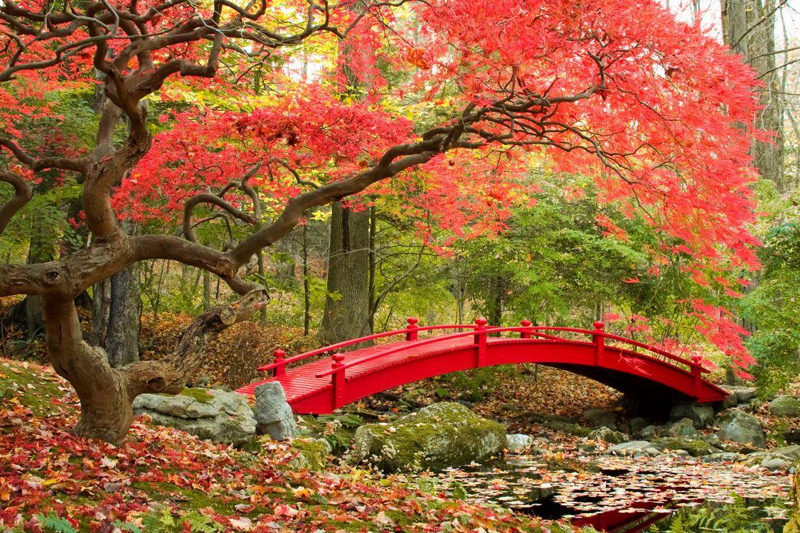 Картины природа японии фото