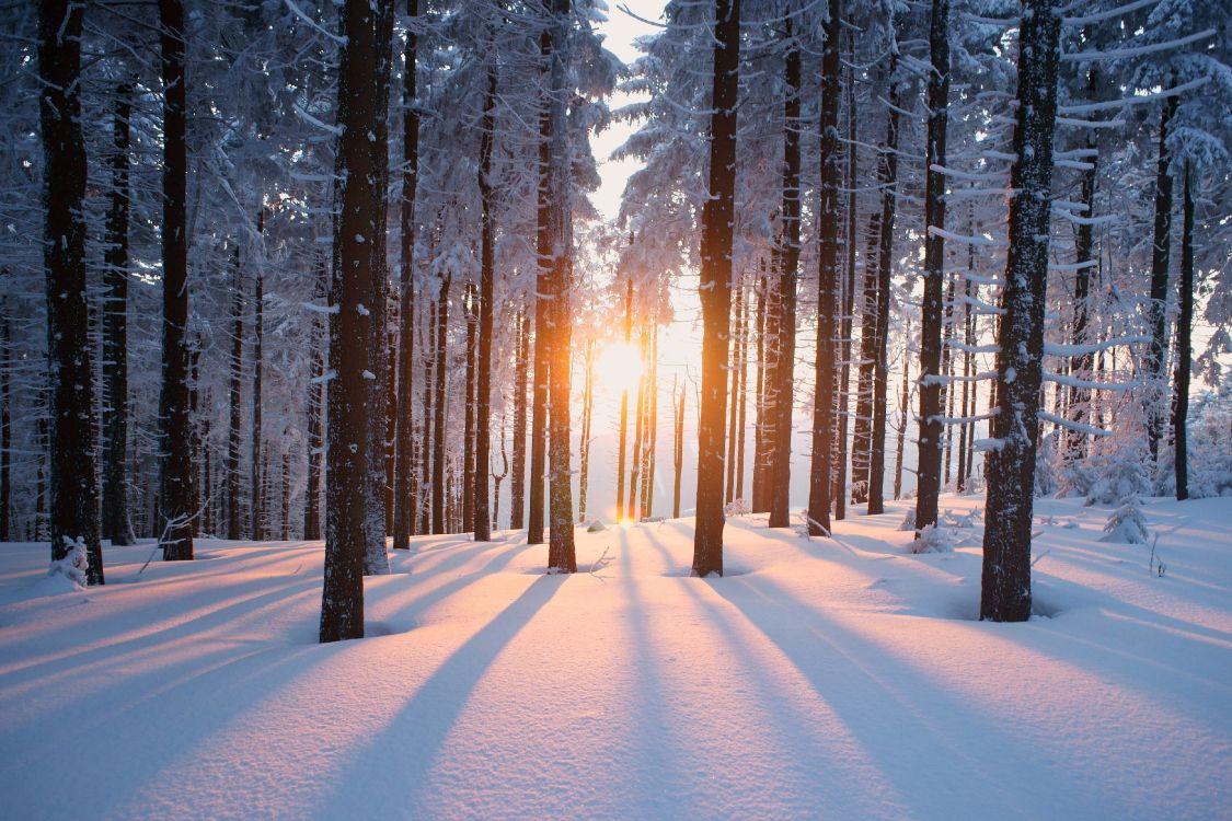 Обои зимний лес, дерево, снег, природа, солнечный свет в разрешении 4000x2666