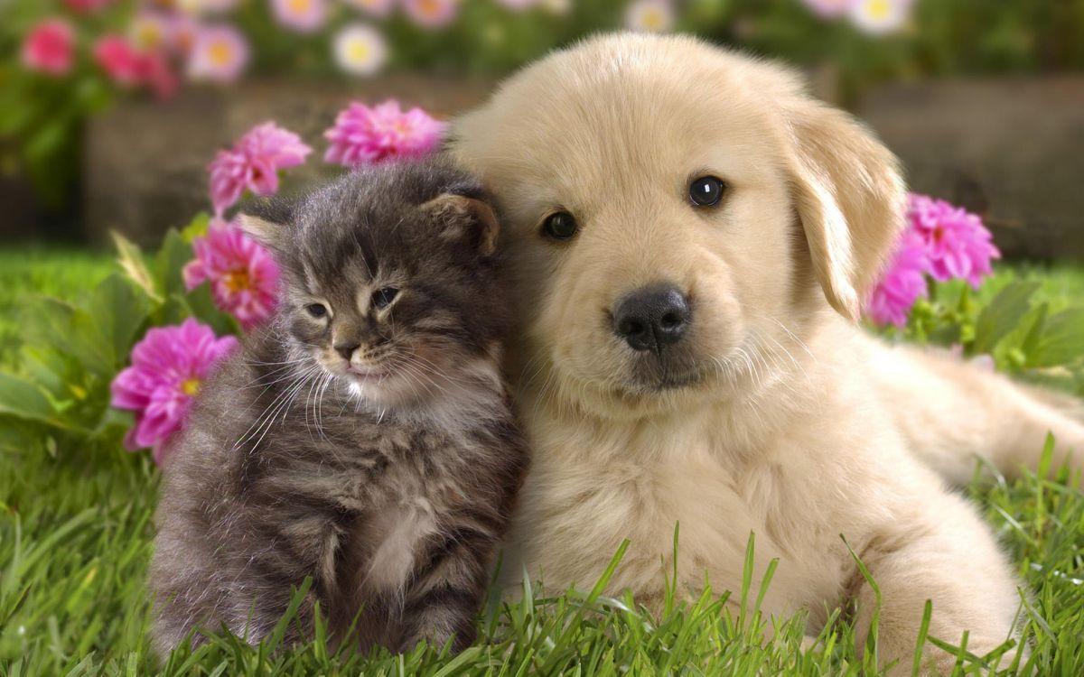 Обои кот, Собака, щенок. Собаки foto 17
