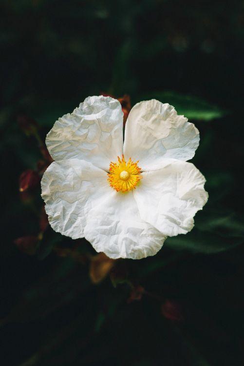 Обои цветок, цветковое растение, белые, лепесток, растение в разрешении 2674x4000