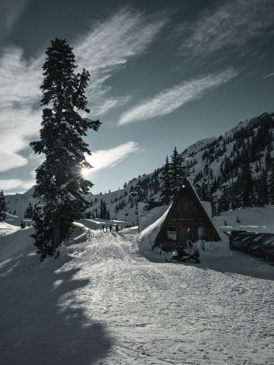 Обои снег, древесные растения, пихта, дерево, зима в разрешении 3448x4592