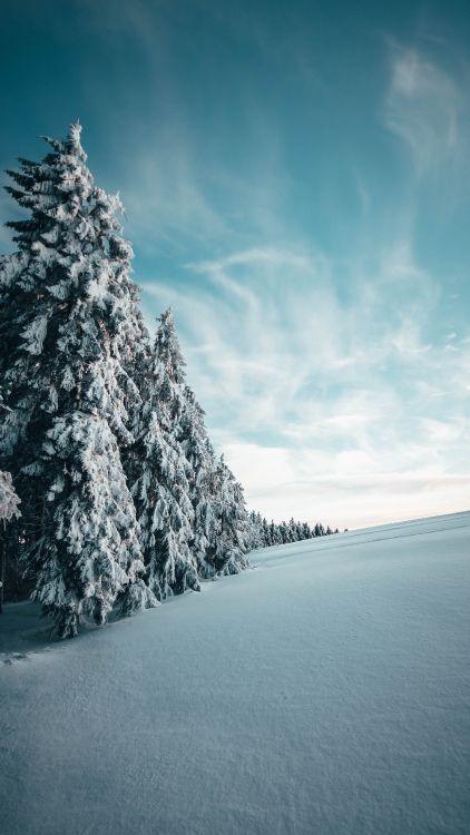 Обои пихта, снег, древесные растения, дерево, синий в разрешении 3161x5608
