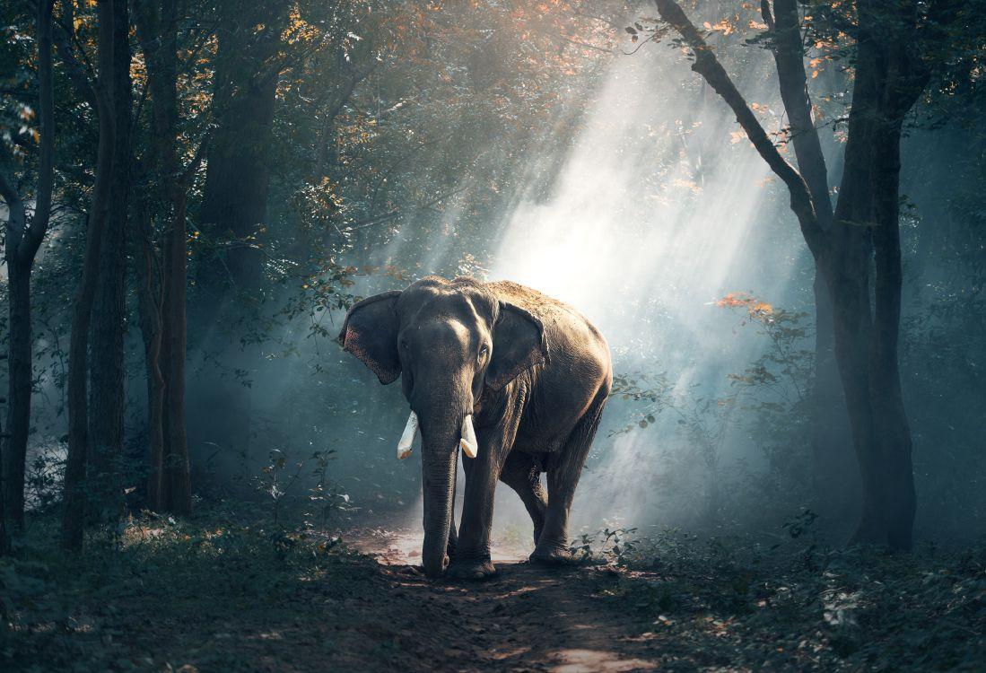 Обои темнота, слоны и мамонты, Слоны, природа, Африканский лесной слон в разрешении 3500x2388