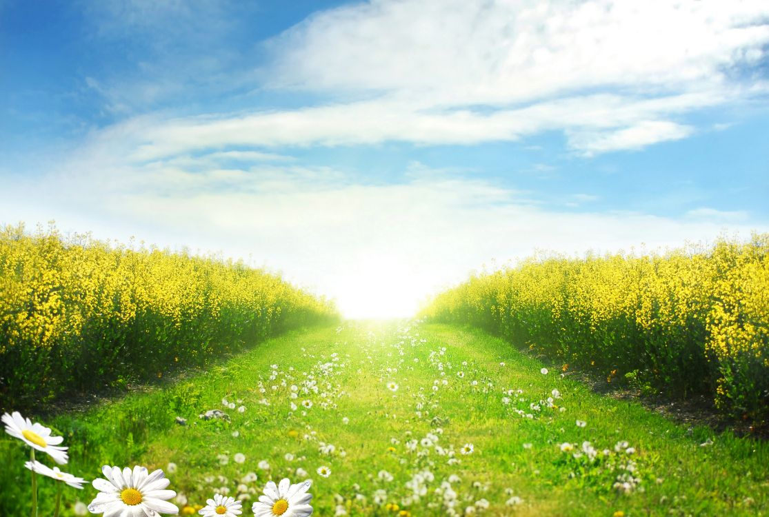 поможет солнечный день фото картинки сосудистых звездочек