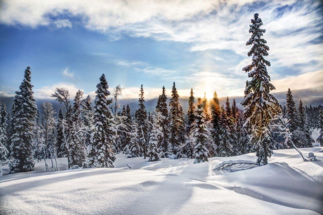 Обои небо, семейства сосновых, ель, Норвегия, экосистема в разрешении 4000x2667