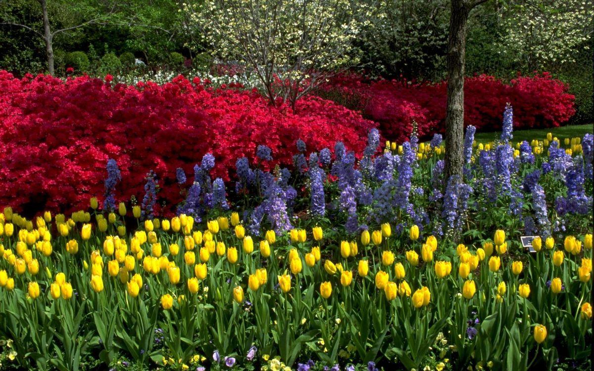 окном цветник весной фото пока эта красотка