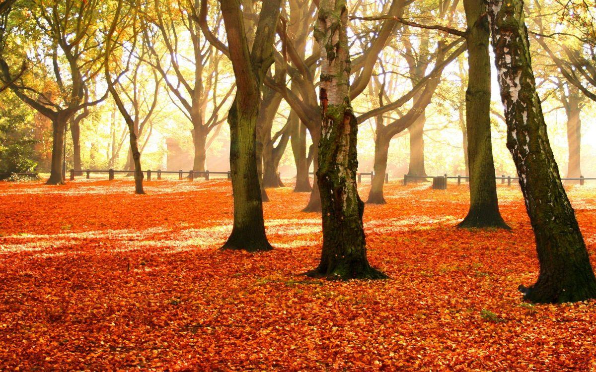 Обои осень, дерево, природа, листопадные, лист в разрешении 2560x1600