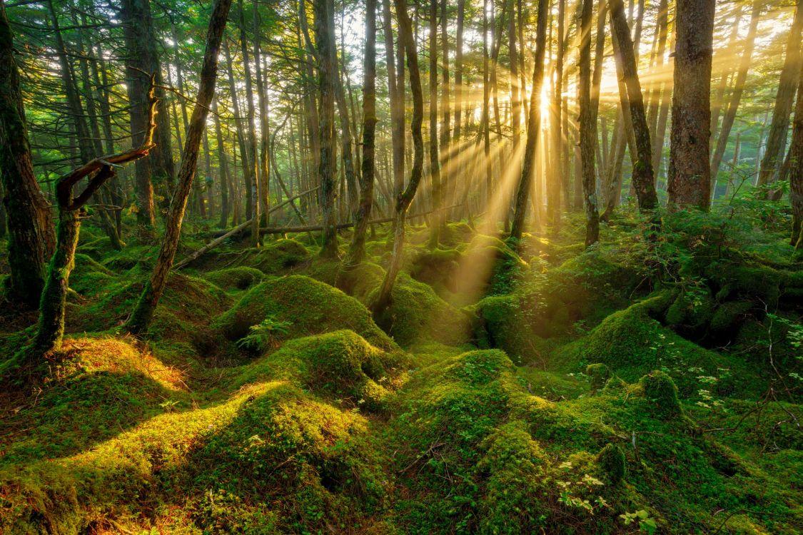 форма, когда лучшие фотографии леса своих фантазиях девушки