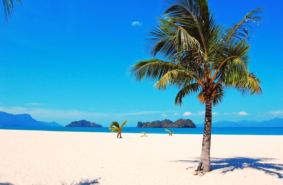 Картинка пальма в море